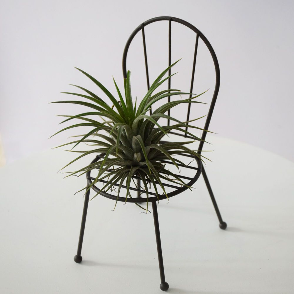 Wire Iron Tillandsias Cactus Air Plant Stand Chair Design Planter ...