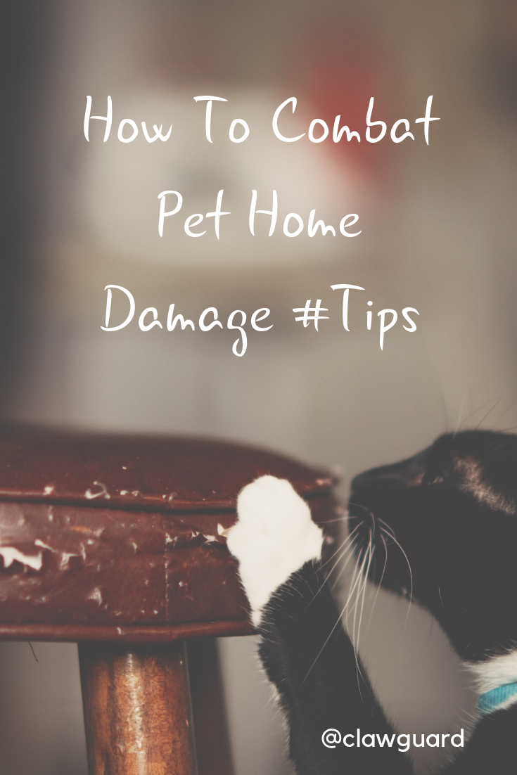How Pet Owners Can Combat Pet Mess Pets Pet Owners Dog Smells