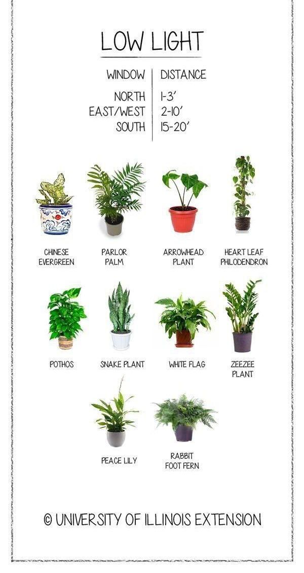 House Plants Heal is part of Plants - House plants are good for you  It's true! There is a body of extensive research  that shows how house plants assist in cleaning the air  y