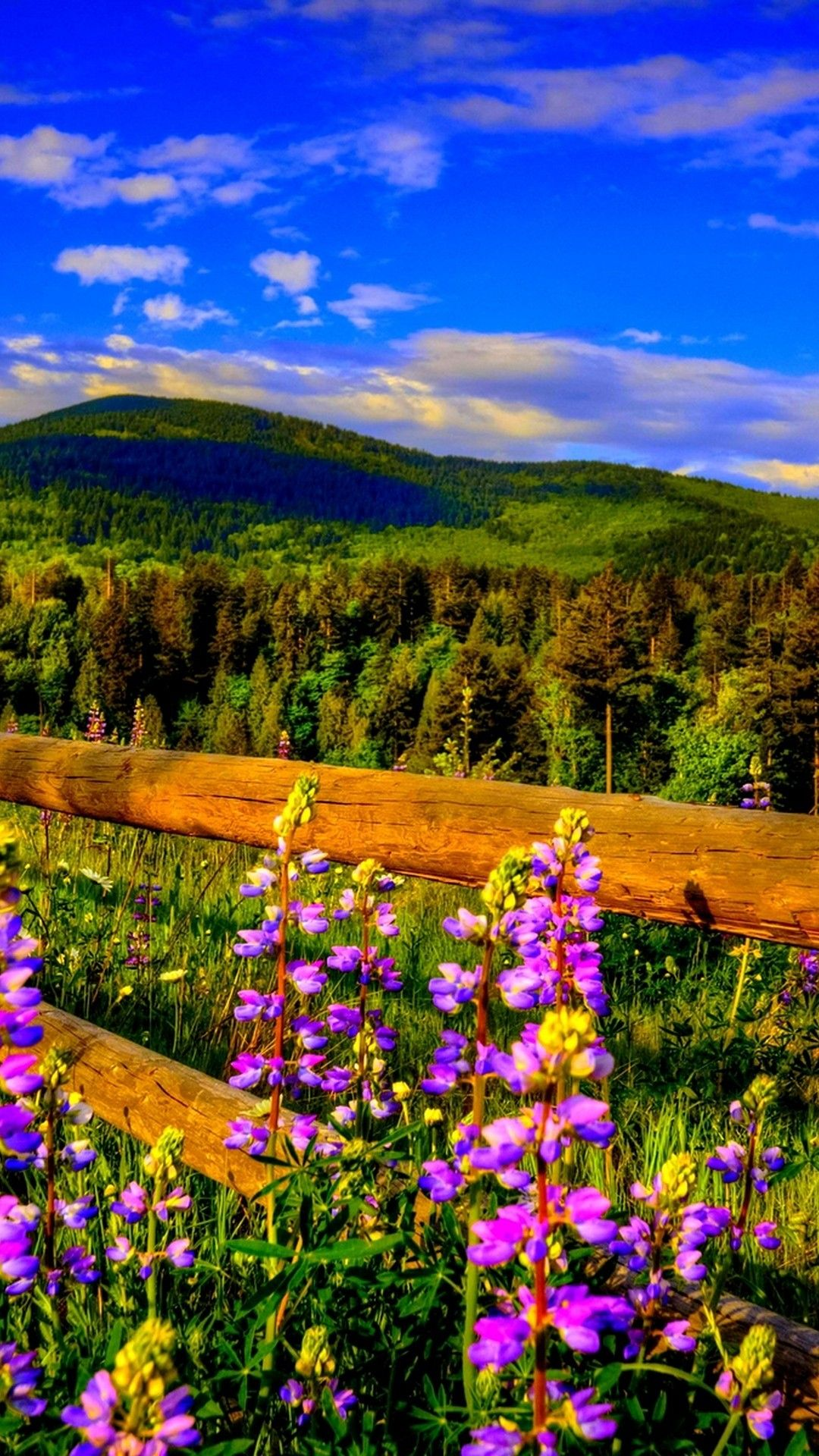 Spring Season Cellphone Wallpaper Best HD Wallpapers