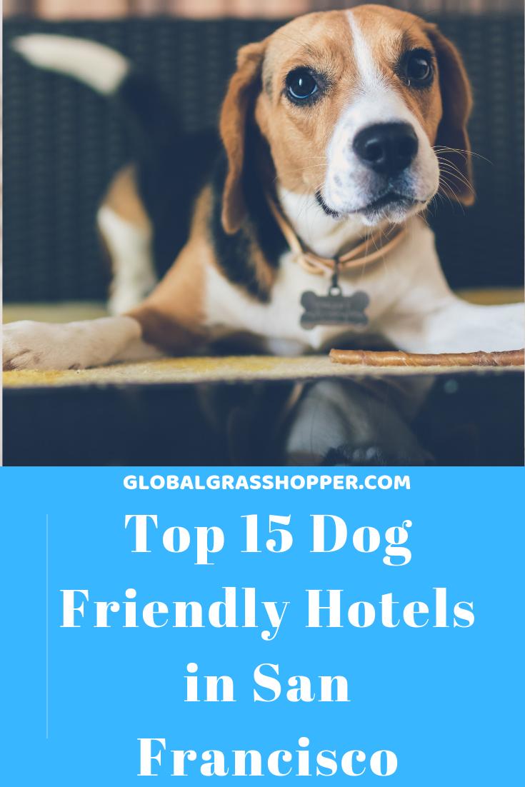 Top 15 dog friendly hotels in San Francisco 2020 Dog