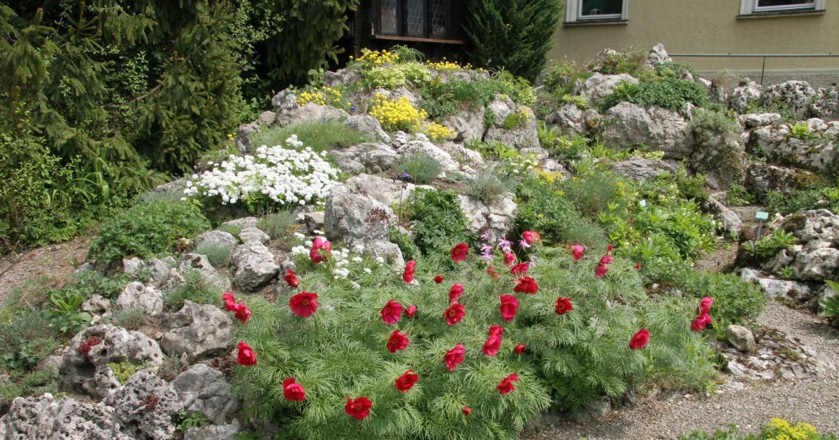Steingarten Anlegen steingarten anlegen