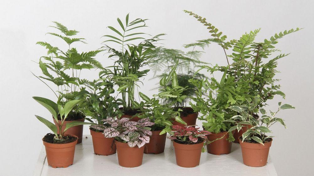 Doucher Une Plante D Interieur Plante Interieur Jardinage Et