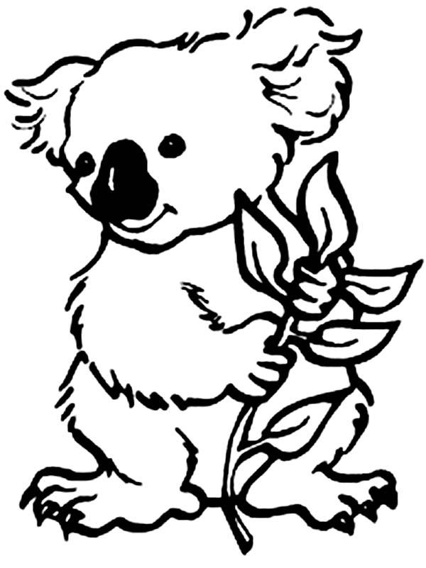 Koala Bear Eating Eucalyptus Coloring Page Color Luna In 2020 Bear Coloring Pages Animal Coloring Pages Koala Drawing