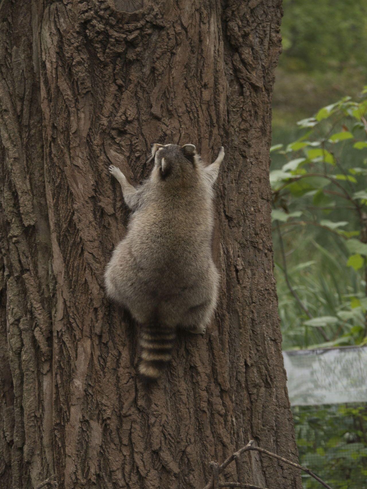 Temperate Rainforest Animals List assorted land mammals