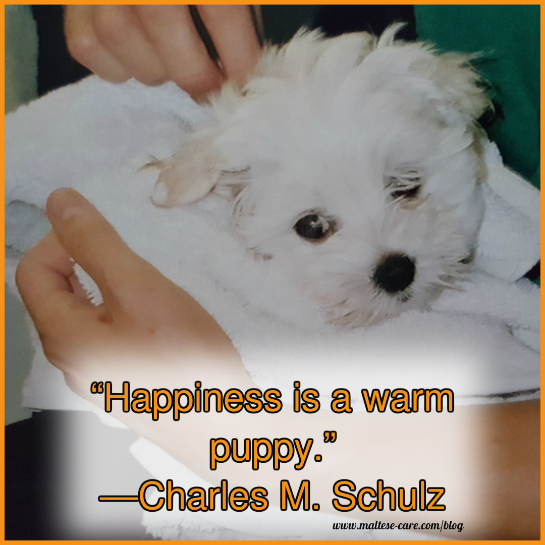 Dog Love Quotes Maltese Dogs Quotes  Maltese Dog And Puppy Quotes