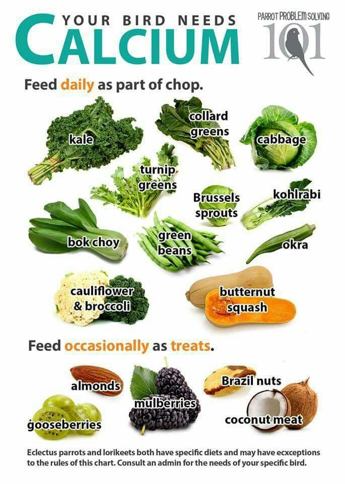Sources Of Calcium I Would Stay Away From The Cabbage Because It Can Cause Digestive Problems Bird Aviary Parrot Food Recipe Parakeet Care