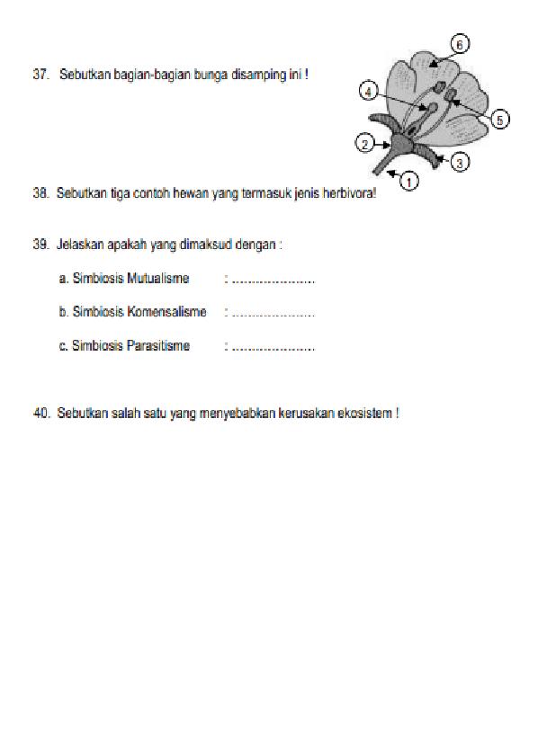Soal Dan Jawaban Ipa Smp Kelas 7 Semester 2