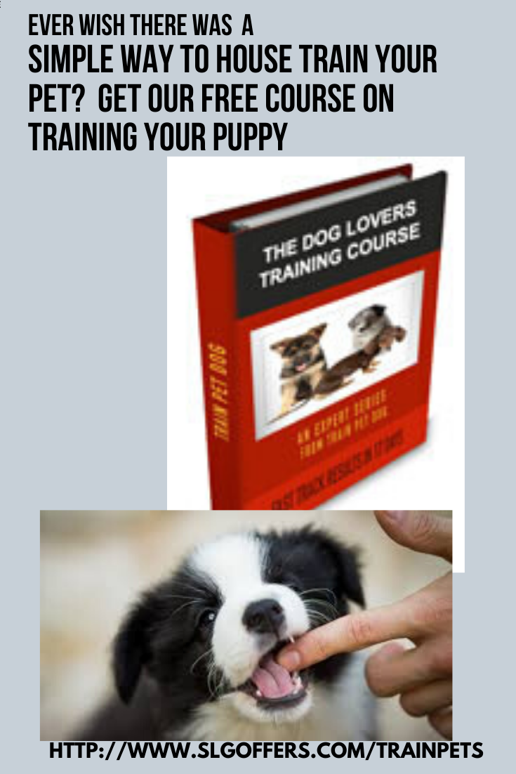 Free Dog Training Course Dog Training School Online Dog Training Training Your Puppy