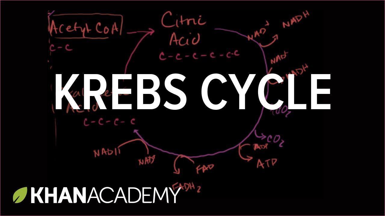Krebs / citric acid cycle | Cellular respiration | Biology | Khan ...