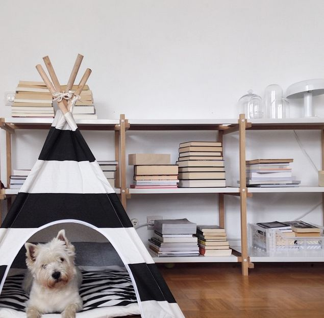 un tipi pour chien d coration decor dogs dog. Black Bedroom Furniture Sets. Home Design Ideas