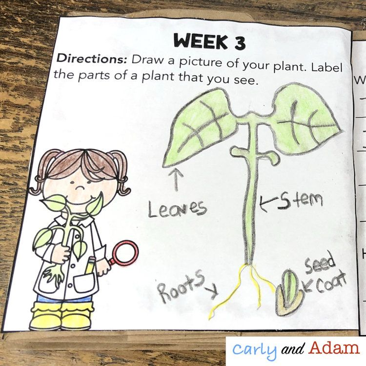 Growing Plants in the Classroom | TpT Misc. Lessons | Pinterest
