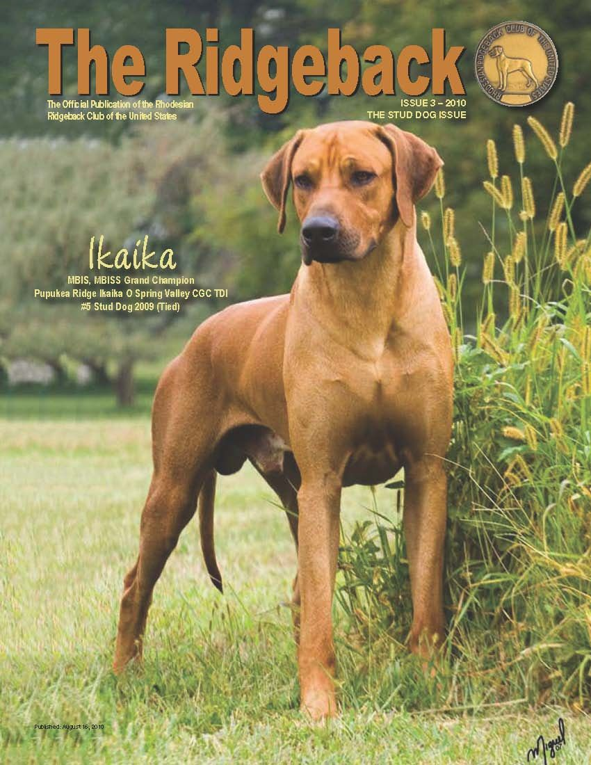 If i ever get a dog this would be it bruno the lion killer explore rhodesian ridgeback a lion and more nvjuhfo Gallery