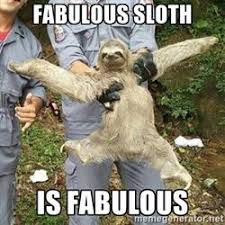 Image Result For Wet Sloth With Images Toddler Humor Sloth