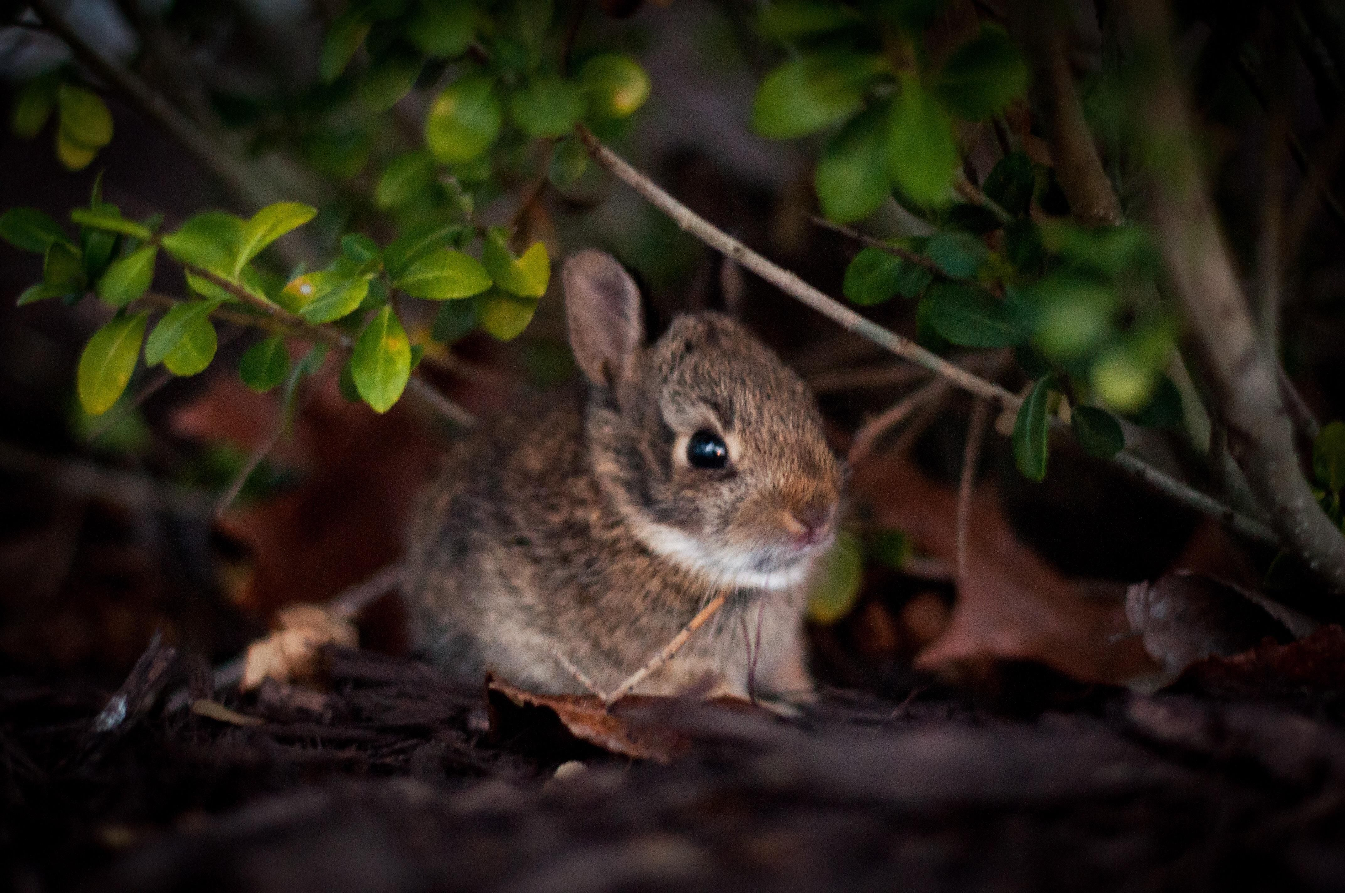 Baby bunnies out front let me photograph them http://ift.tt/2qlrO2Z