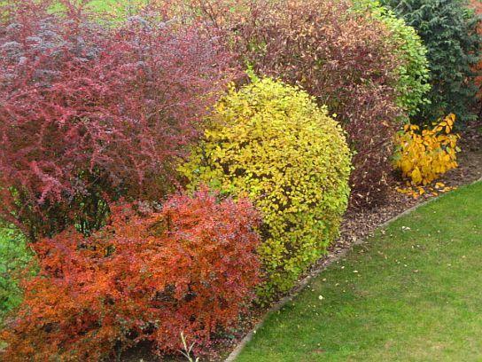 Warnung Vor Dieser Pflanze   Seite 7   Mein Schöner Garten Forum