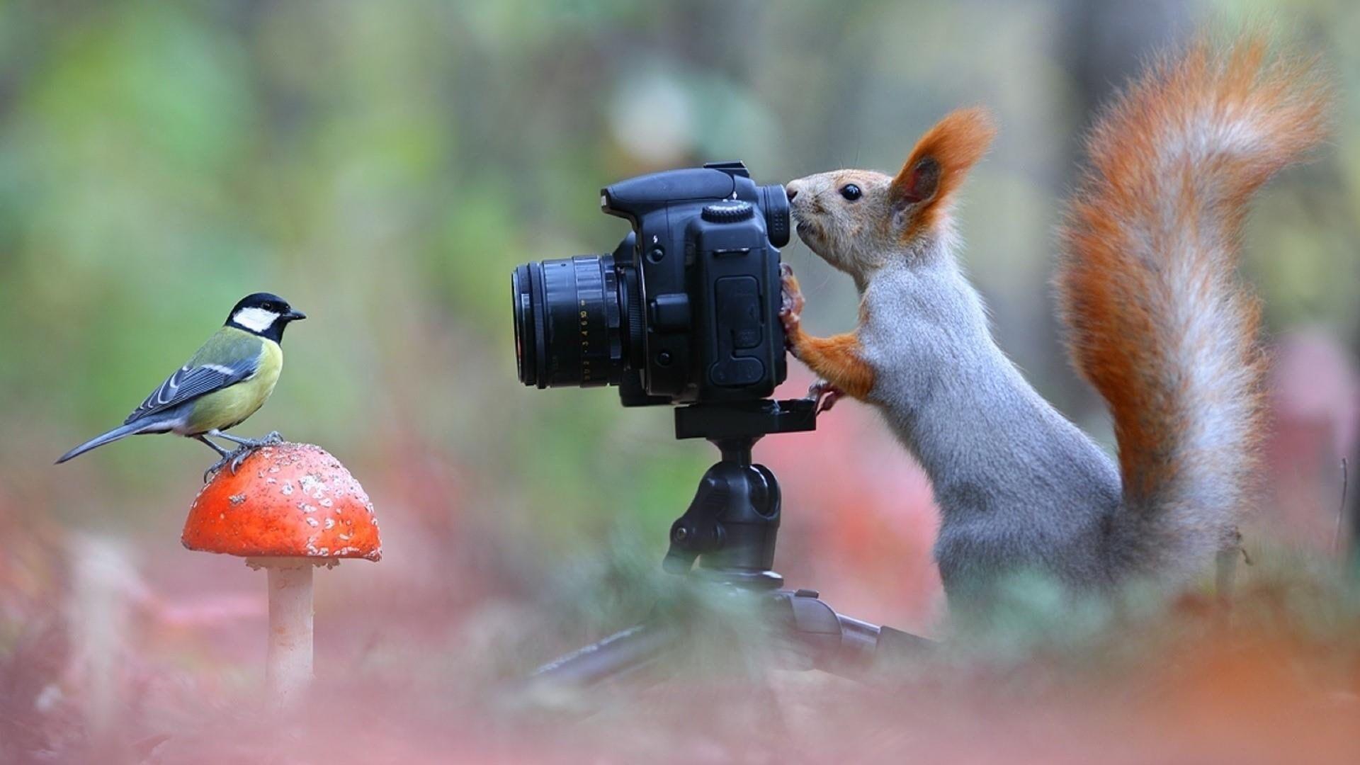 Funny Squirrel Bird Photo Mushroom Animals 1080p Wallpaper Hdwallpaper Desktop Animals Animal Wallpaper Cute Animals
