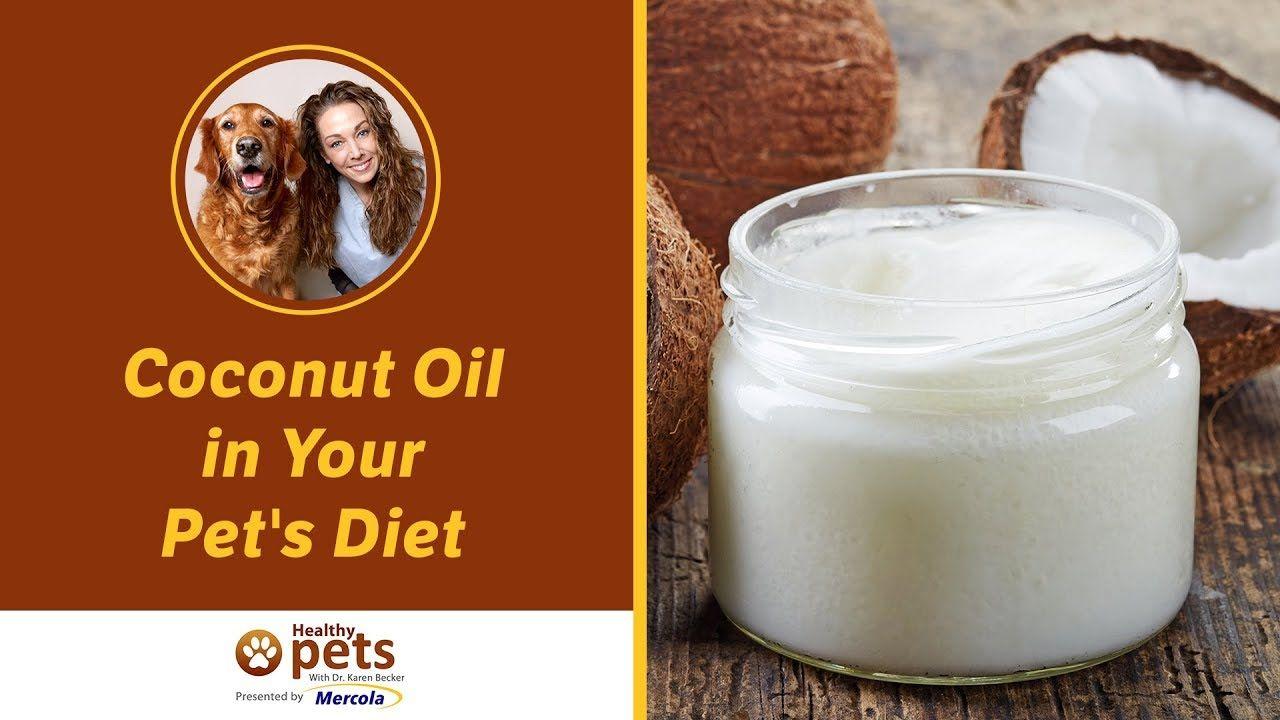 Coconut Oil in Your Pet's Diet | Pet diet, Coconut oil for ...