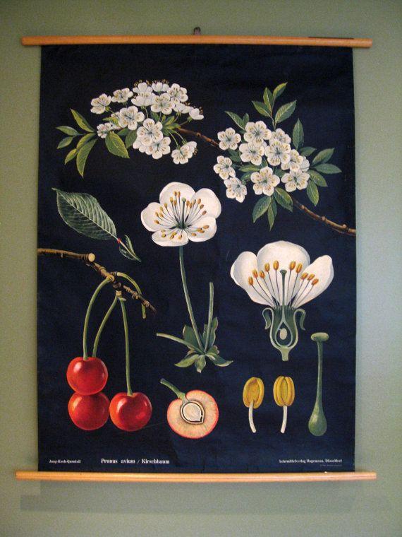 Cherry Tree Vintage Botanical Wall Hanging Roll Chart Etsy Botanical Poster Botanical Prints Vintage Botanical