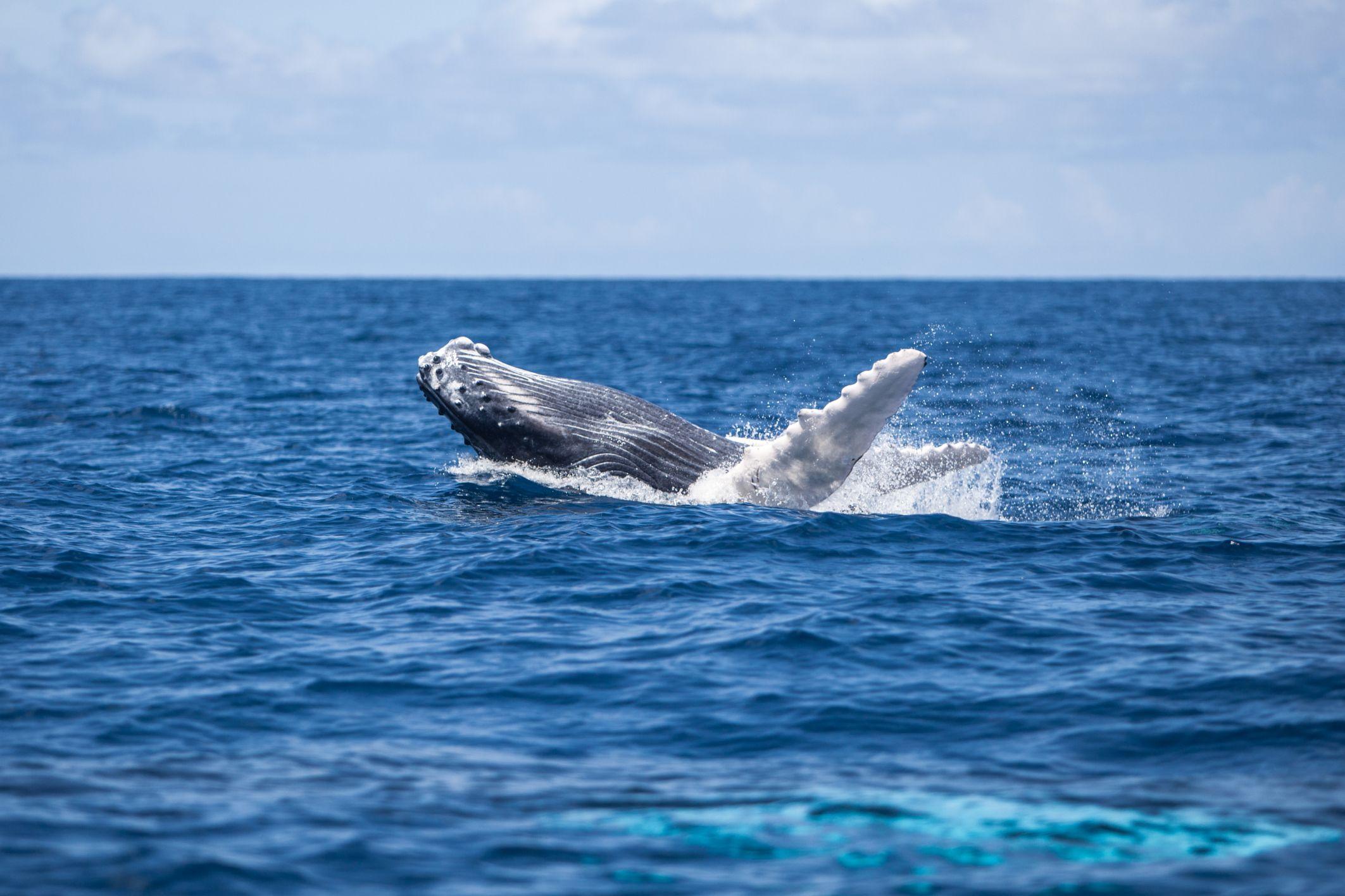 República Dominicana Qué Hacer Más Allá Del Todo Incluido Whale Animals