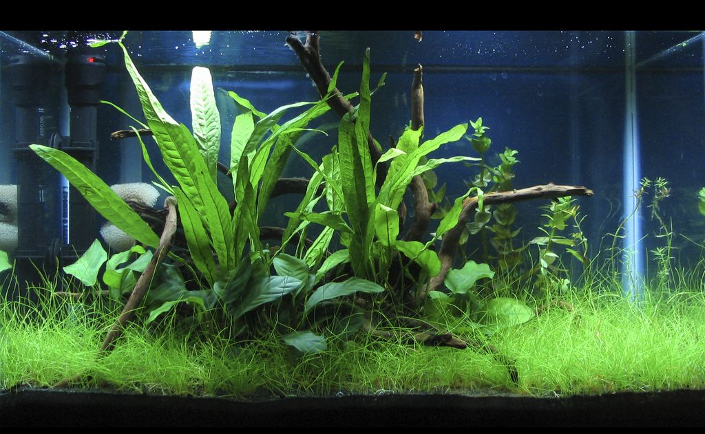 My First Planted Tank 10 Gallon Low Tech Betta Haven Aquascaping Aquatic Plant Central Aquascape 10 Gallon Fish Tank Fish Tank Design