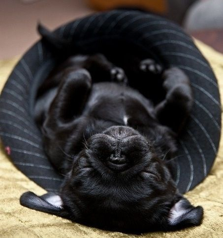 Upside down snooze