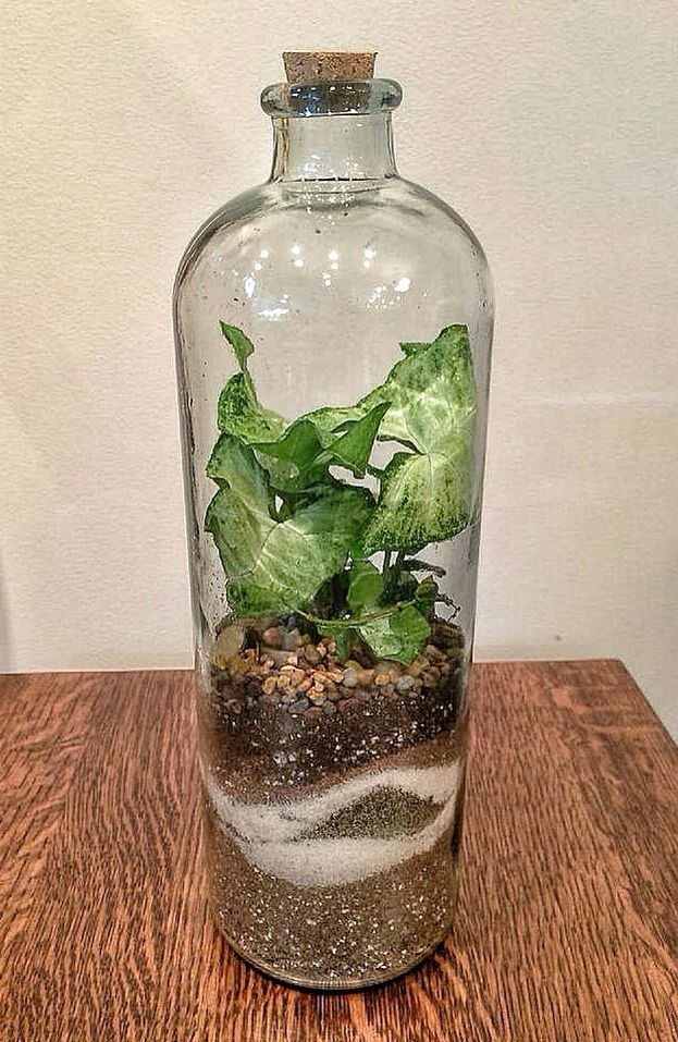 A New Creation Terrarium Plants Garden