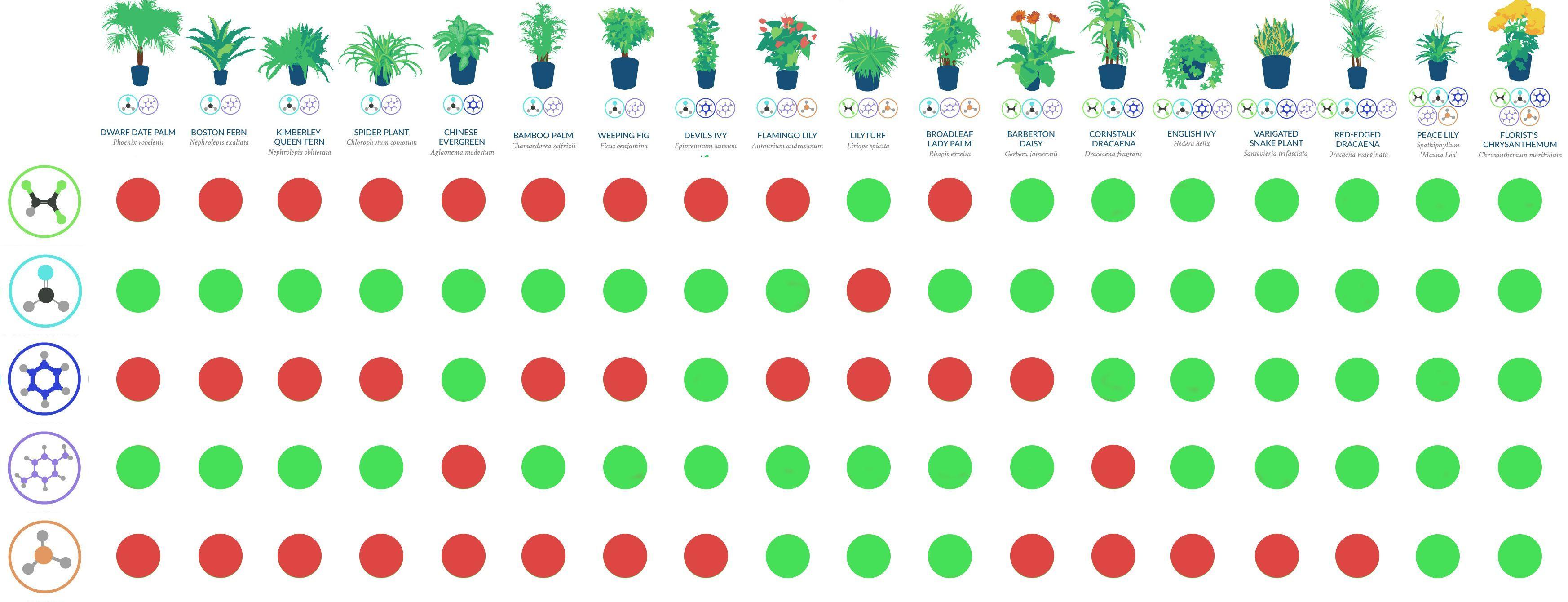 nasa guide to air filtering houseplants pdf Google