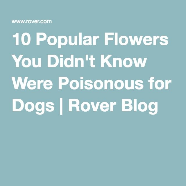 10 Popular Flowers You Might Not Know Are Poisonous For Dogs Popular Flowers Flowers 10 Things
