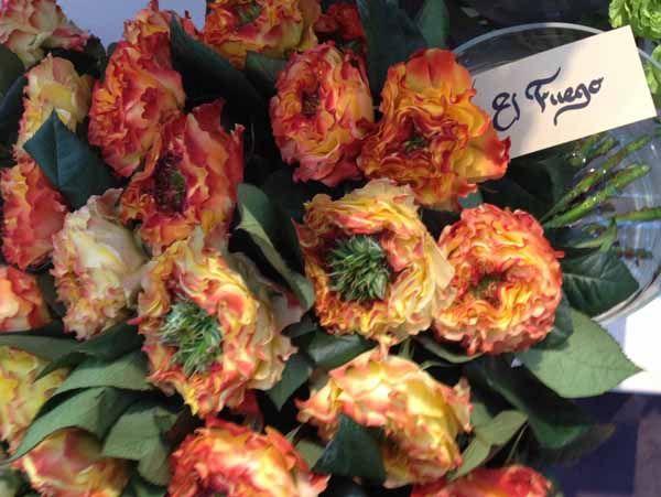 el fuego garden rose flower identification pinterest. Black Bedroom Furniture Sets. Home Design Ideas