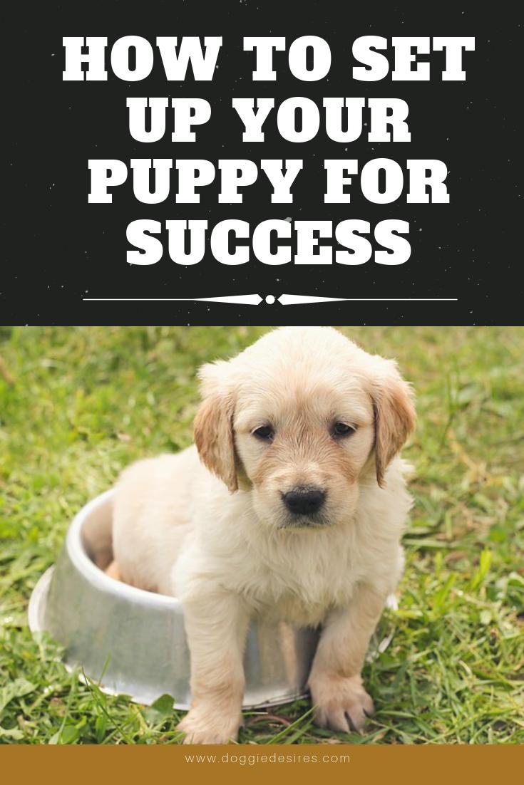 best puppy stuff