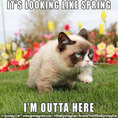It Looks Like Spring I M Outta Here Grumpycat Spring Funny Grumpy Cat Memes Grumpy Cat Grumpy Cat Meme