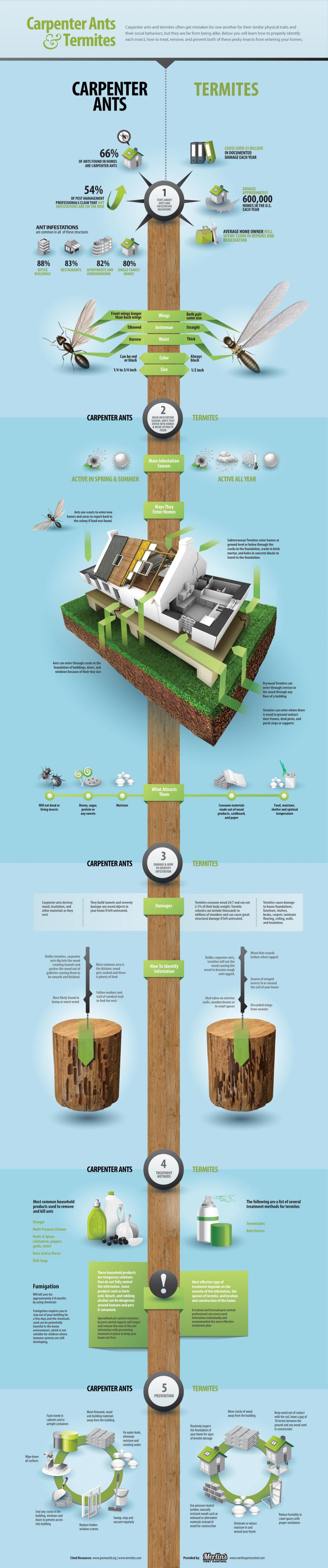 Carpenter Ants & Termites Infographic