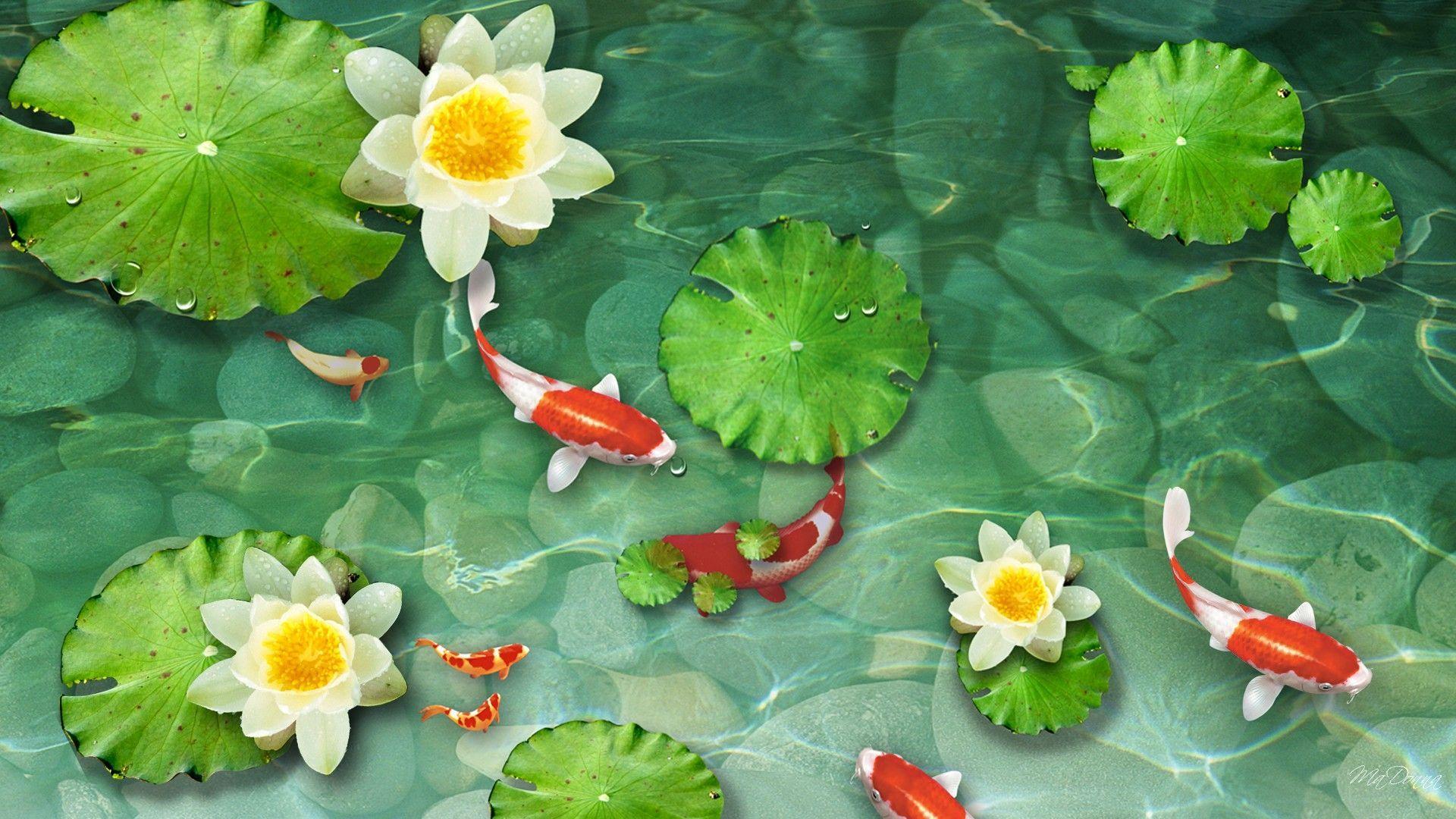 Koi Pond Wallpapers Wallpaper Cave Koi Fish Drawings Koi Pond