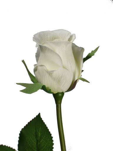 rose bud mature singles These real touch artificial silk fake roses are available in a variety of colors including red, white, peach, yellow, cream, pink, and more wholesale pricing available.