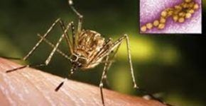 #mosquitoes #fragrant #plants #repel #that5 Fragrant Plants That Repel Mosquitoes #plantsthatrepelmosquitoes