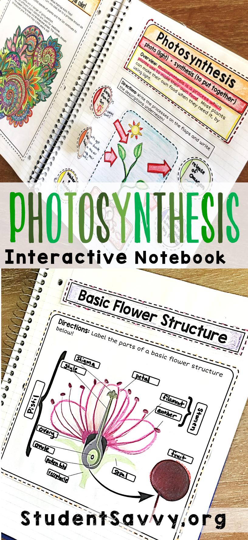 Photosynthesis Interactive Notebook Уроки биологии