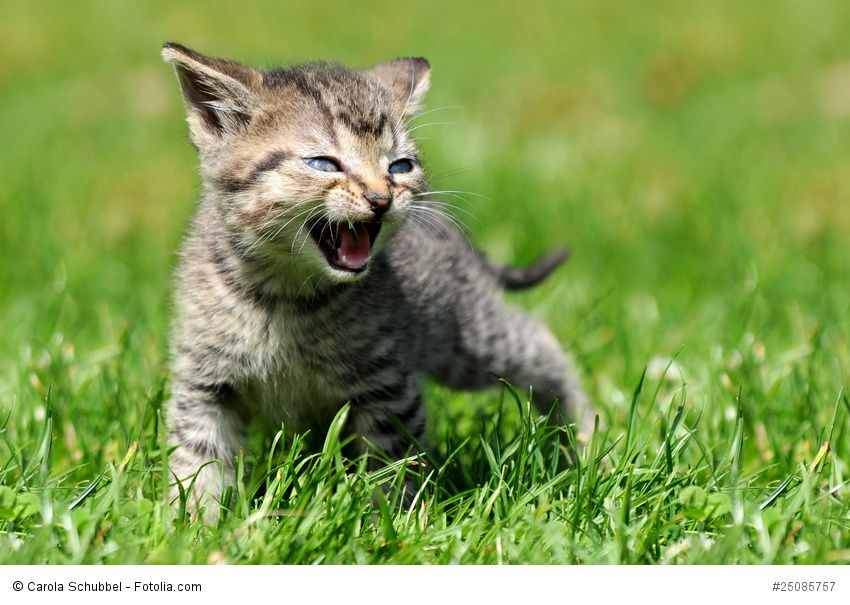 Miau! Ich habe Hunger!