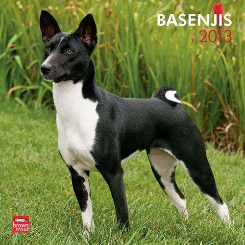 Has anyone owned a dog breed called Basenji?
