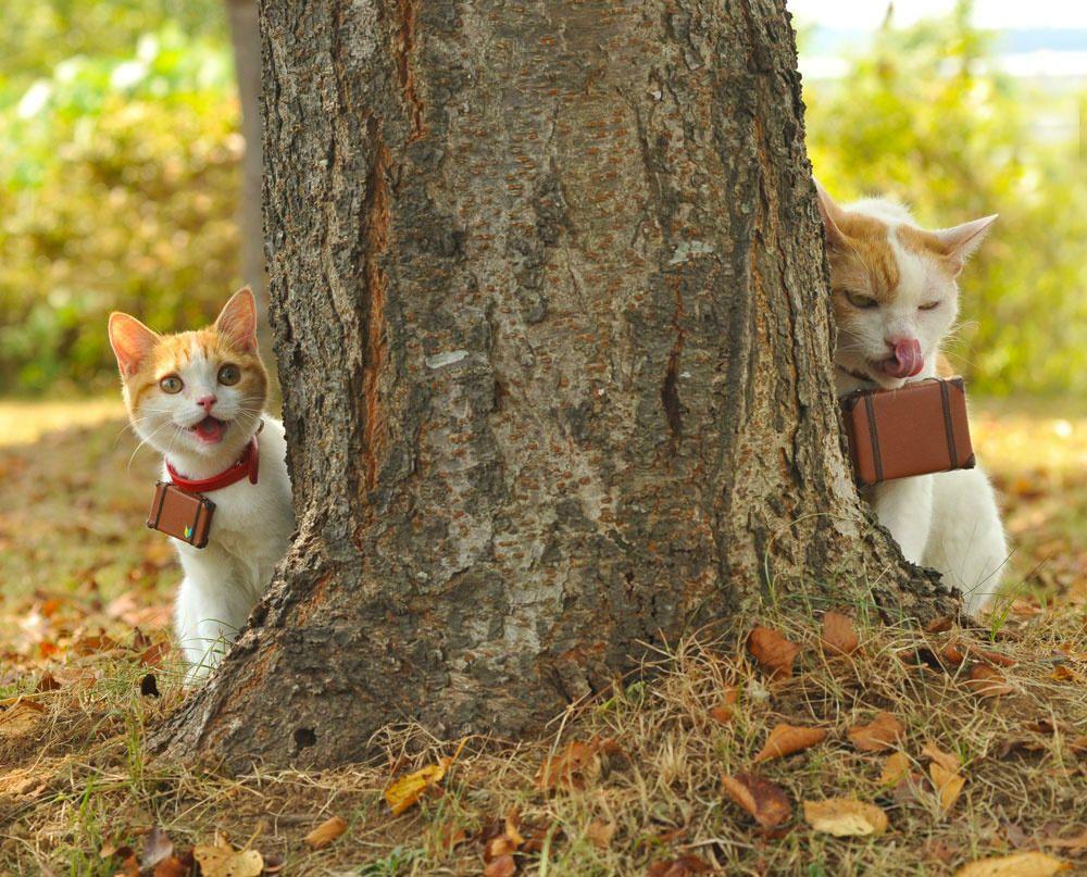 ししょー が、いにゃい! Cats