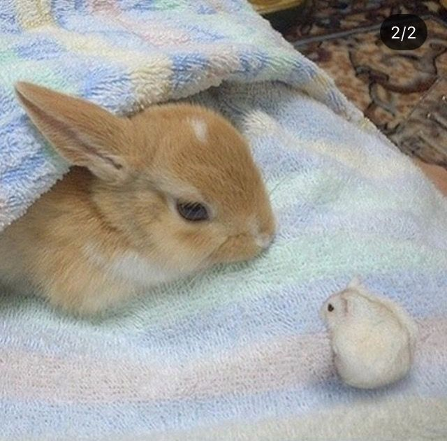 Pin by Adeline on Animal Cute hamsters, Cute baby