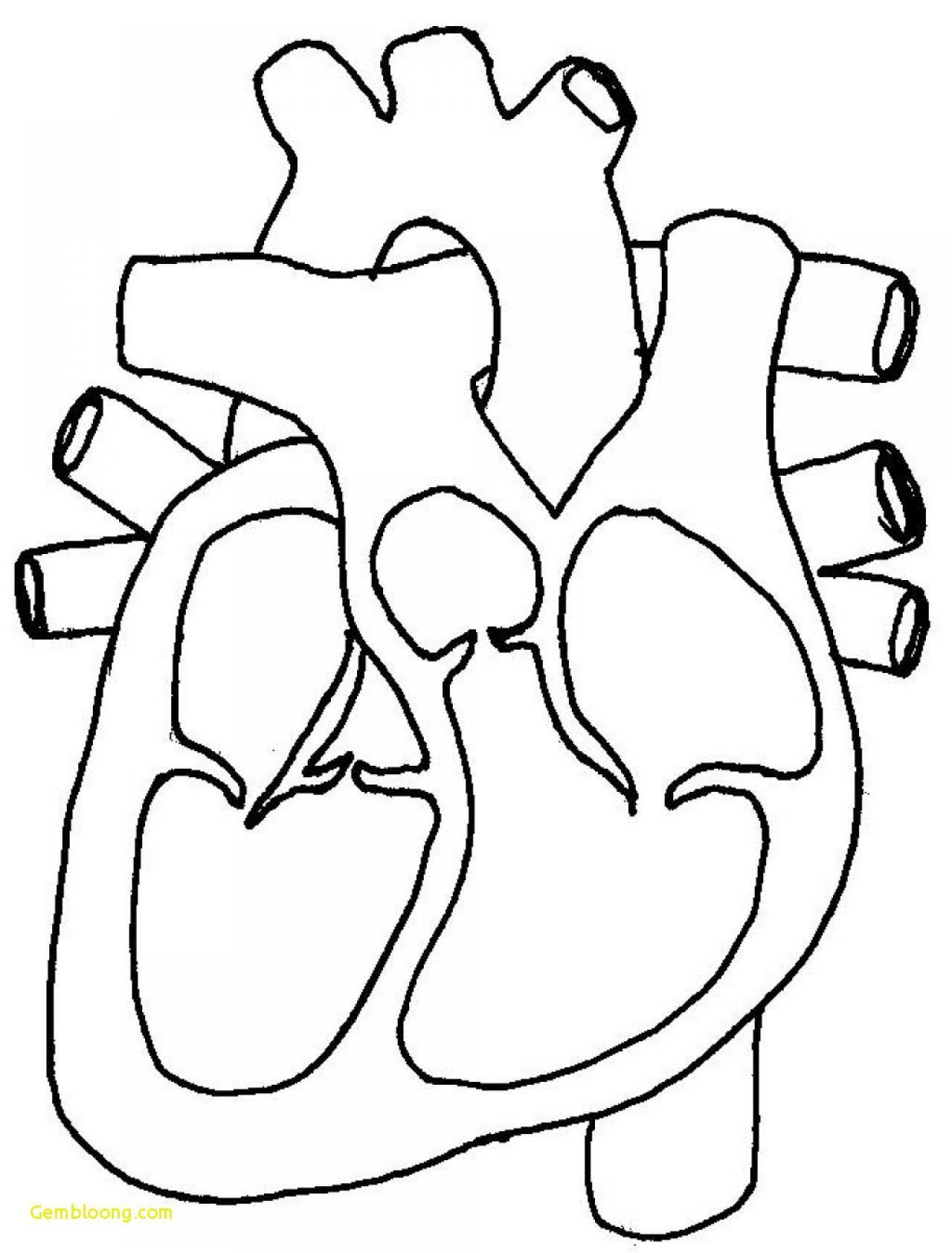 Human Heart Coloring Pages Blank Human Body Diagram In