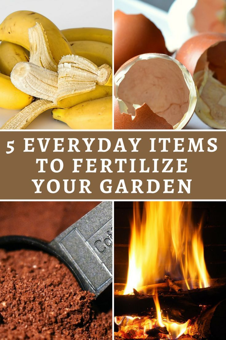 how often to fertilize lawn in colorado
