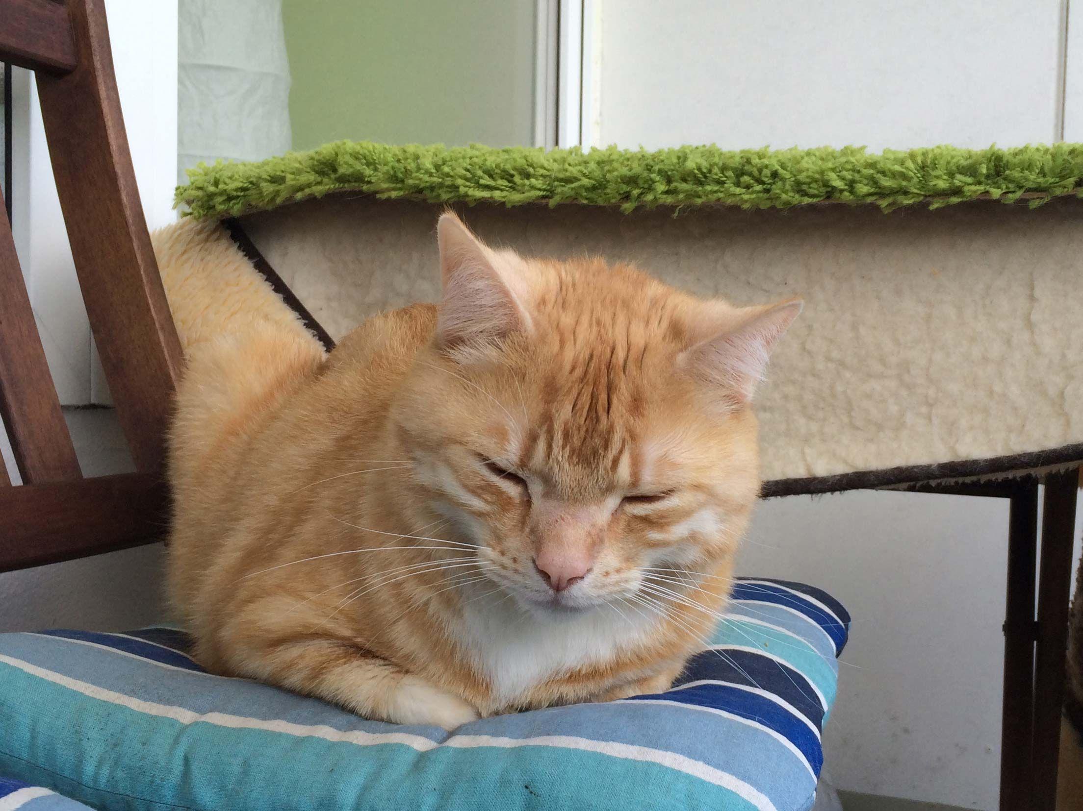 warum fl he katzen so gerne m gen was hilft katzengesundheit pinterest katzen katzen. Black Bedroom Furniture Sets. Home Design Ideas