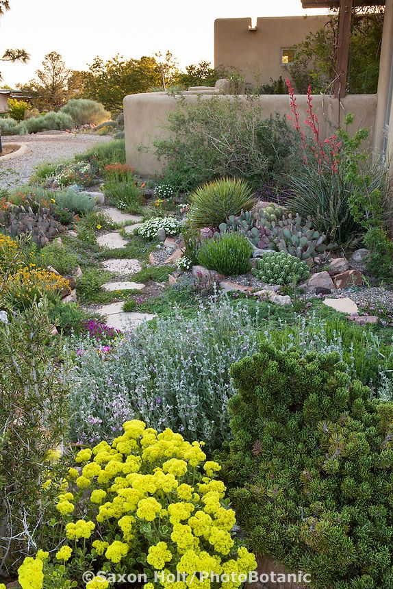 Stepping Stone Path Through David Salman New Mexico Xeric Rock Garden | Xeric  Gardening | Pinterest | Stepping Stone Paths, Stone Paths And Garden ...