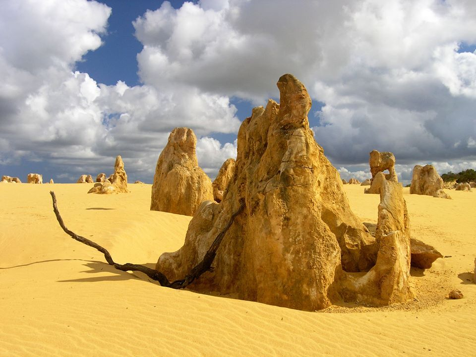 "The Pinnacles ""Western Australia"