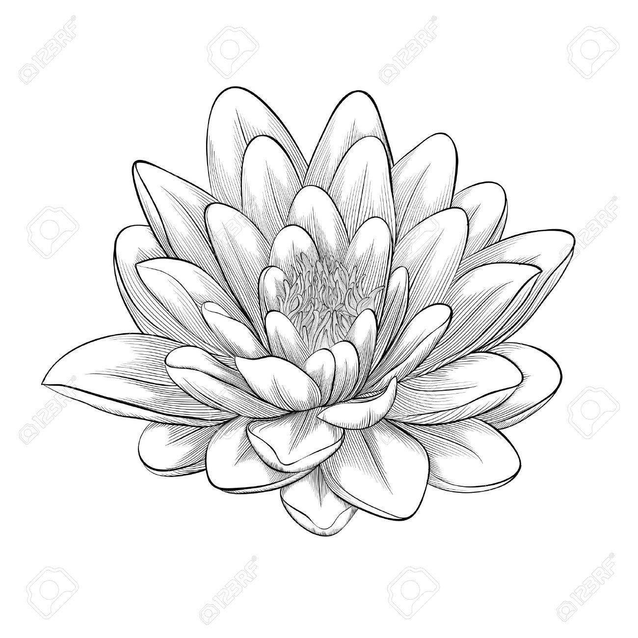 Schöne Schwarz Weiß Schwarz Und Weiß Lotusblüte In Grafik Stil Isoliert Auf