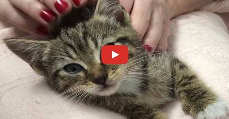 Socializing a Spicy Feral Kitten (With images) Feral