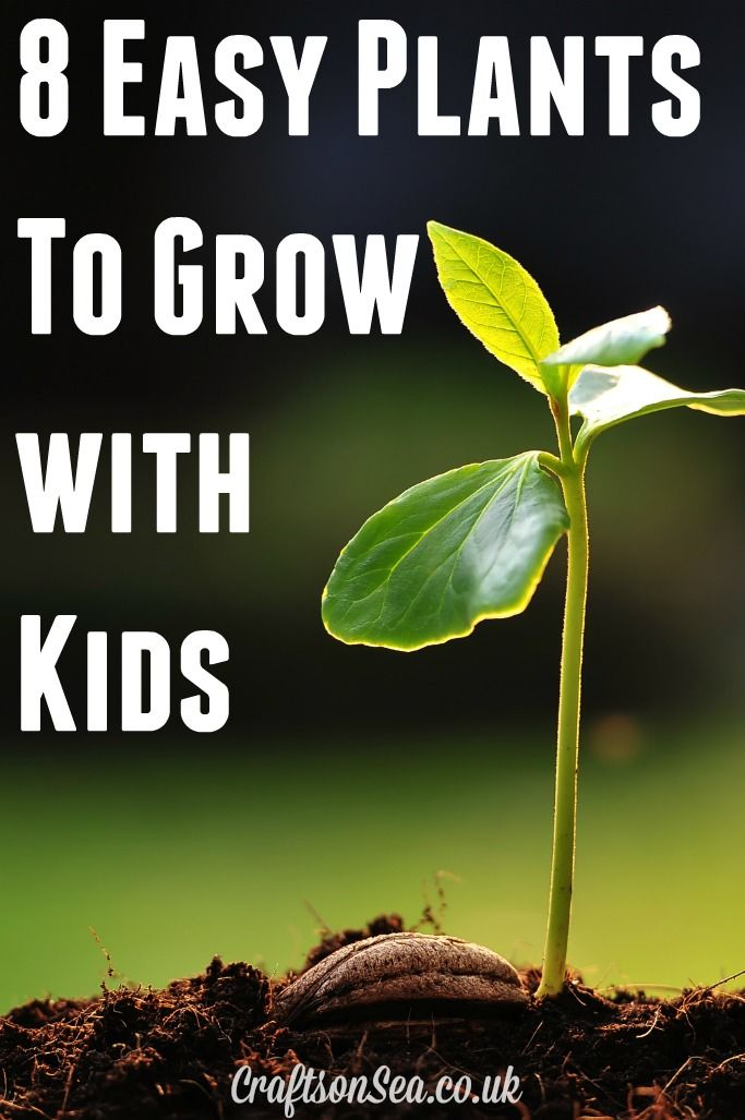 Delightful Need Ideas For Gardening With Kids? Check Out These Easy Plants To Grow  With Kids Including Fun Fruit And Vegetables To Plant!
