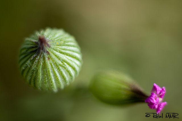 Pequeñas   Flickr: Intercambio de fotos